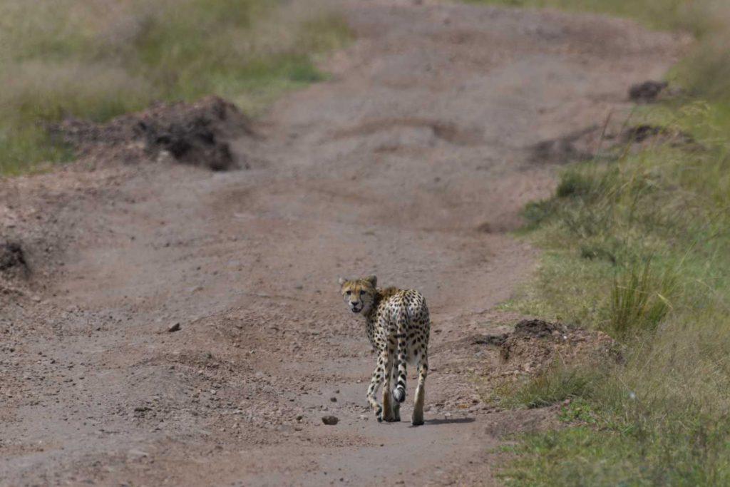 Tunnelma Safari